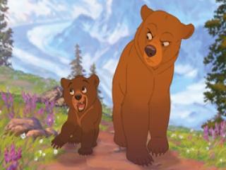 Ga mee op ontdekking in het oerwoud met de 2 schattige beren, Kenai en Koda.