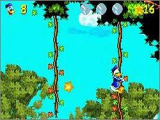 In het oerwoud gebruikt Donald Duck de lianen om naar omhoog te klauteren.